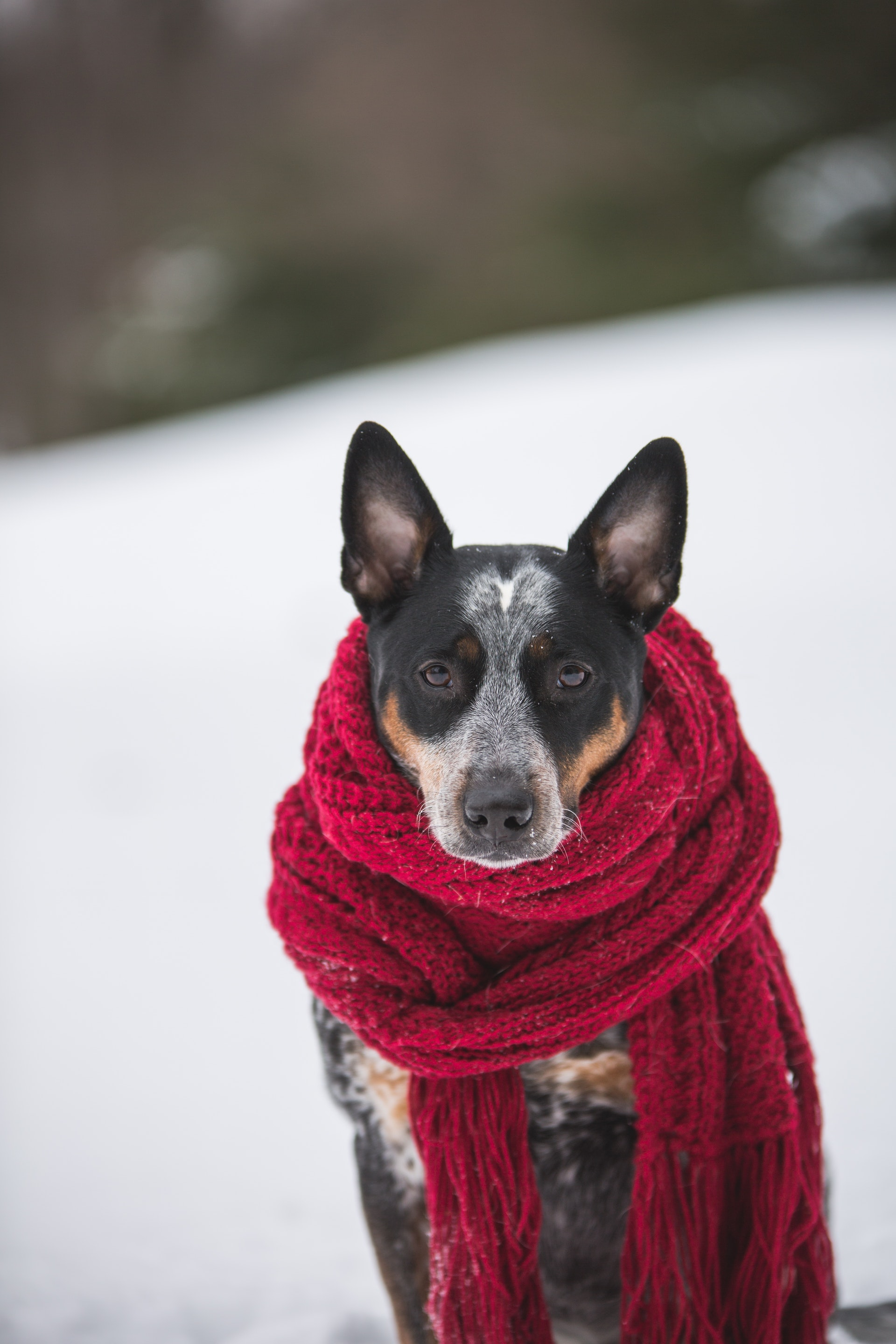 Bring Your Pets in From the Cold and Be sure Your Home is Pet-Proof